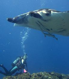 Discover Scuba Diver course (2DIVE)
